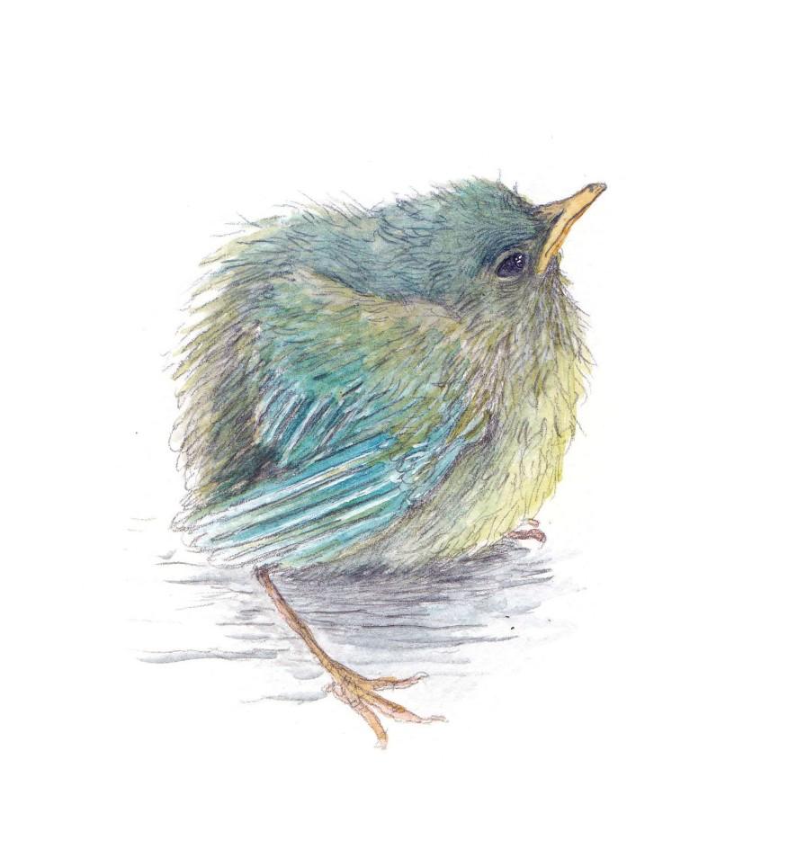 babbybird