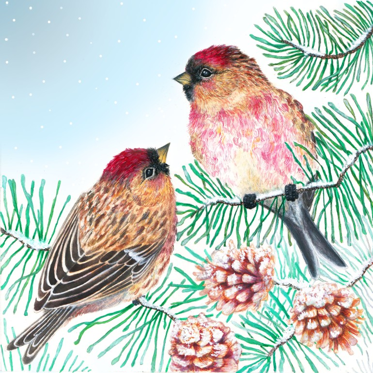 songbirdsurvival
