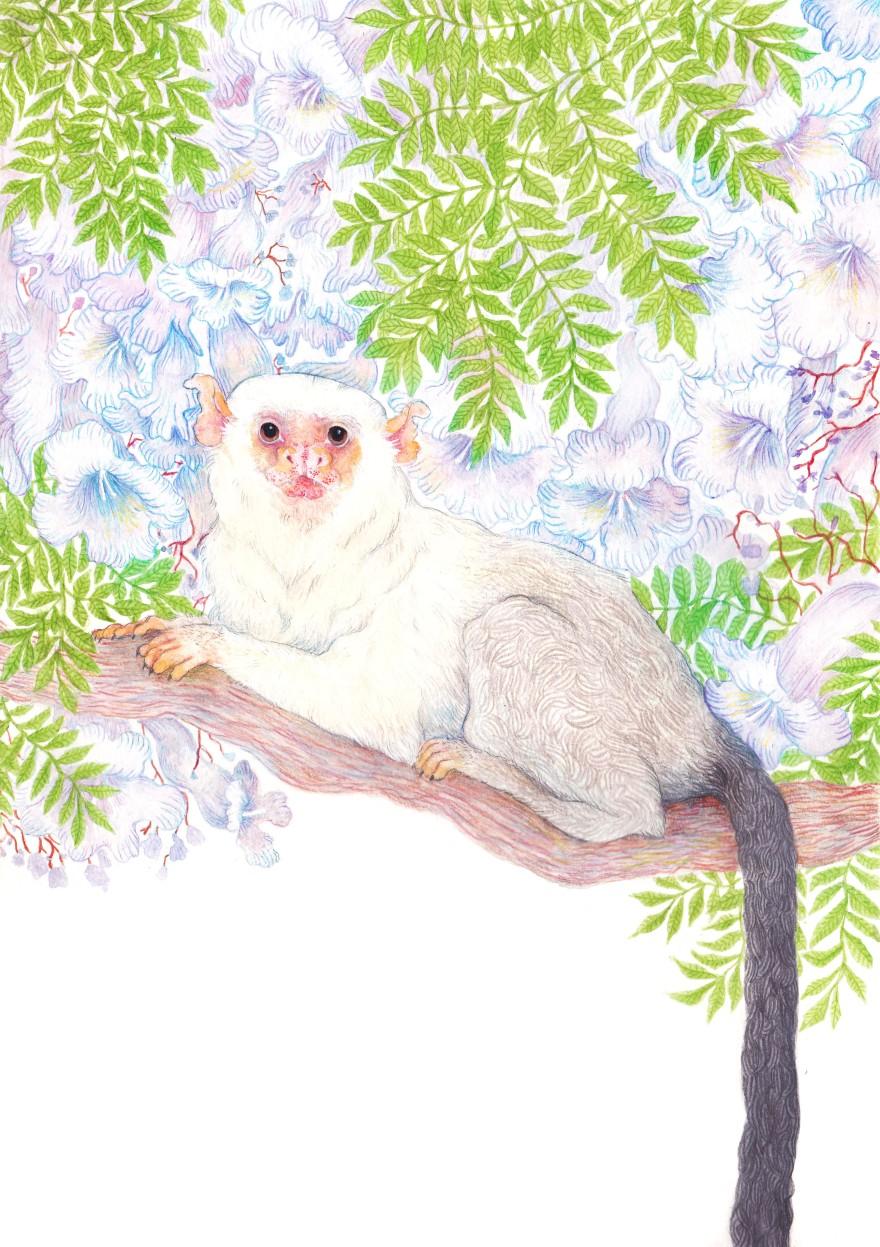 Silvery marmoset by Jen Muir