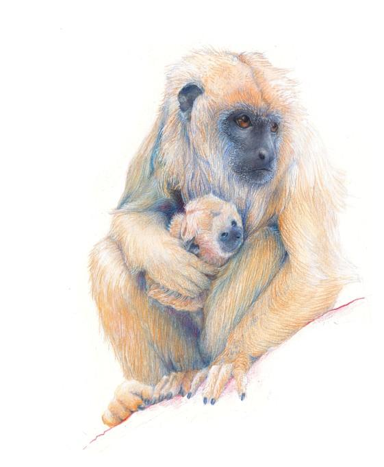 Howler Monkey by Jen Muir